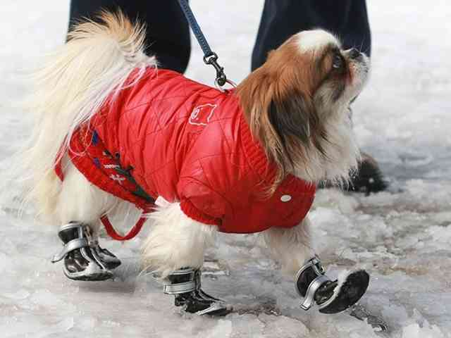 Dog in Boots - Puzzles Gallery